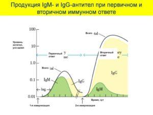 Что такое IgM и IgG