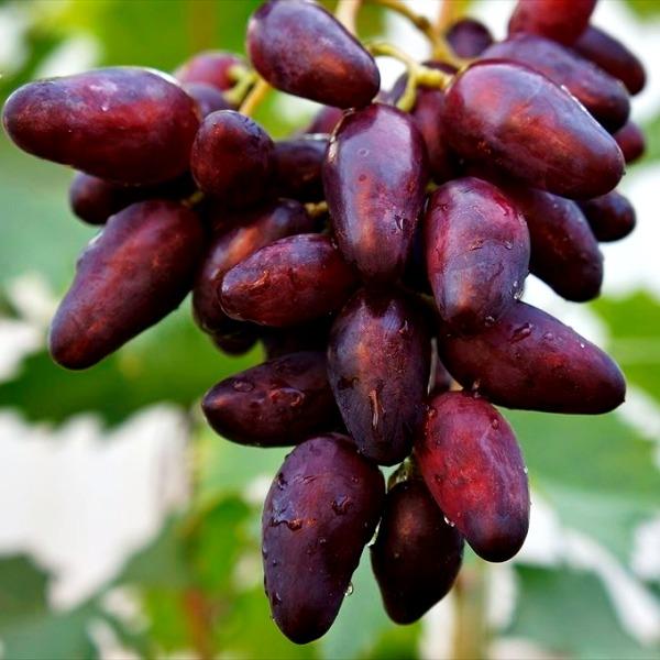 Виноград - источник кальция