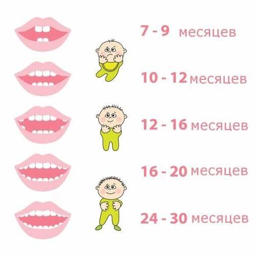 Последовательность прорезывание зубов у детей