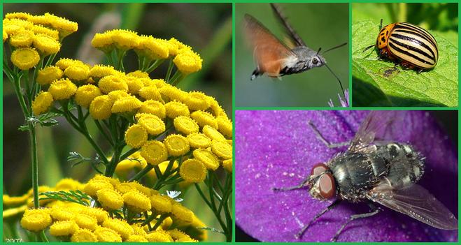 Запах травы отпугивает насекомых