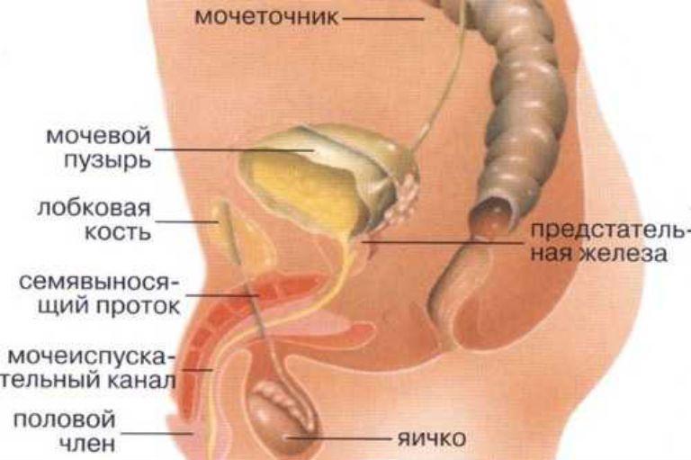 боль в области мочевого пузыря у мужчин