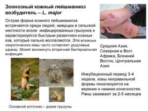 Зоонозный или сельский тип заболевания