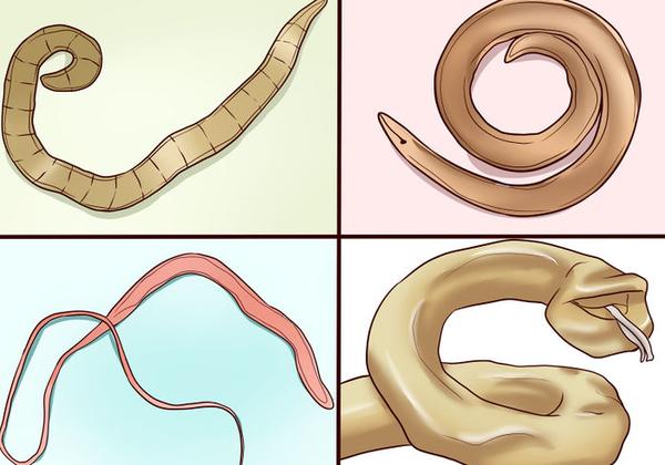 Разновидности гельминтов