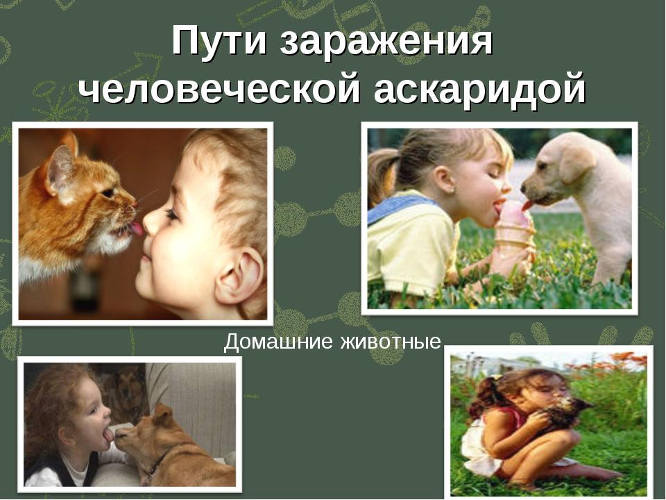 Контакт с животными