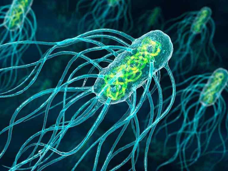 какие бактерии вызывают цистит у женщин