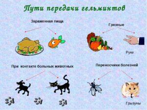 Как глисты проникают в организм ребенка?