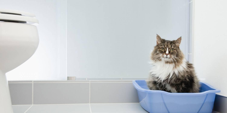 Кошка трется задом о судно