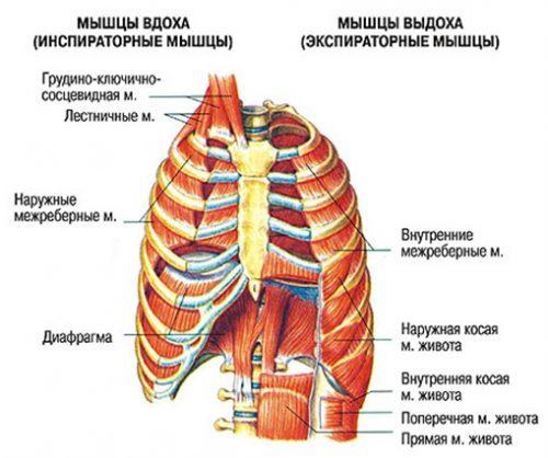 Дыхательная гимнастика по методу Бутейко