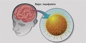Последствия укуса клеща: клинические проявления и меры предосторожности