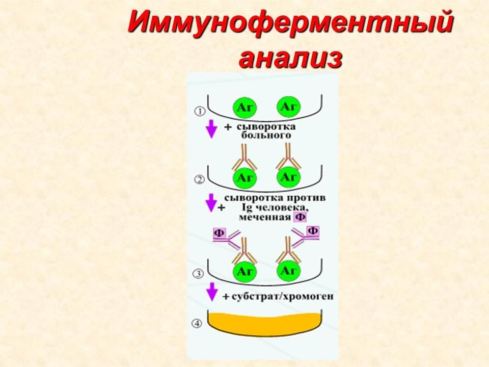 Иммуноферментный метод анализа на глисты