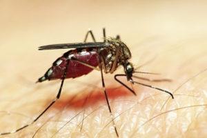 Через укус насекомых