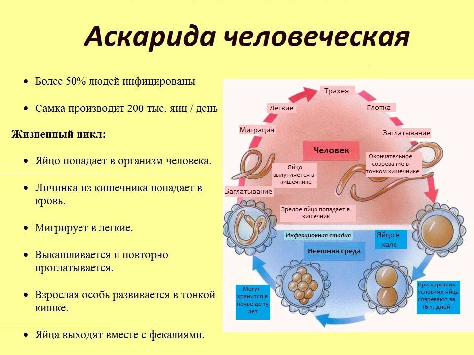 Описание паразита