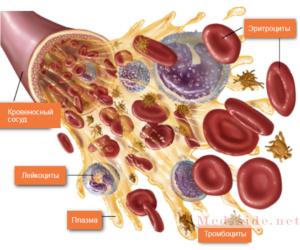 Кратко о главном: Для чего нужна кровь, и какие функции в человеческом организме она выполняет