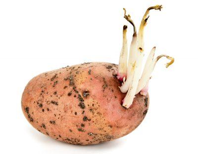 Картофельные ростки при одышке