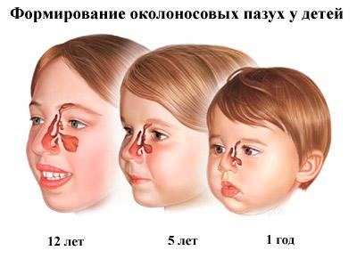 Строение носа у детей