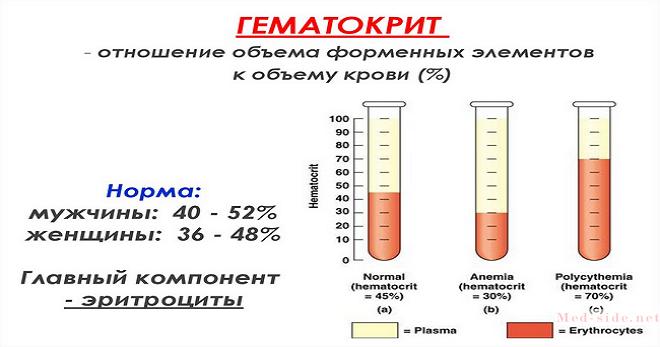 Из чего состоит кровь человека: разбор компонентов плазмы и форменных элементов
