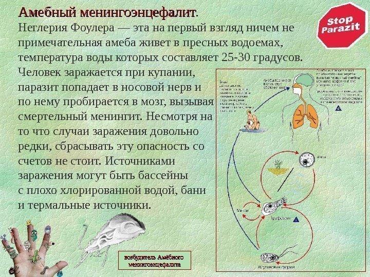 Ппервичный амебный менингоэнцефалит